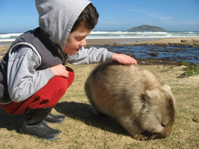 Wombat at Wilsons Promontory