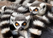 Visit and tour the tourist attractions of Madagascar