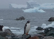 Visit and tour the tourist attractions of Antarctica